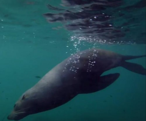 Australian fisherman jumps in to film a swim with seal