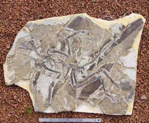 Study: Dinosaur fossils reveal ancient animal pigments