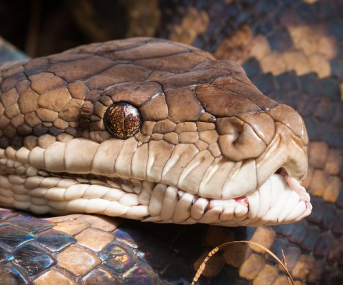 Pet store owner survives constriction by 20-foot python