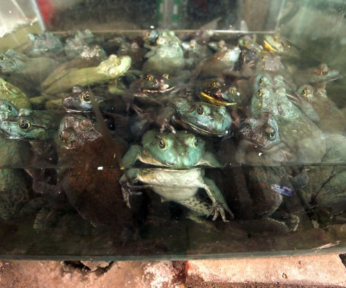 New study reveals how frog heads are formed