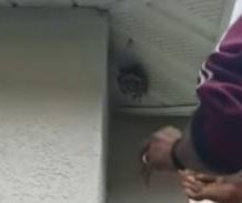 Florida man destroys nest full of wasps with his bare hands