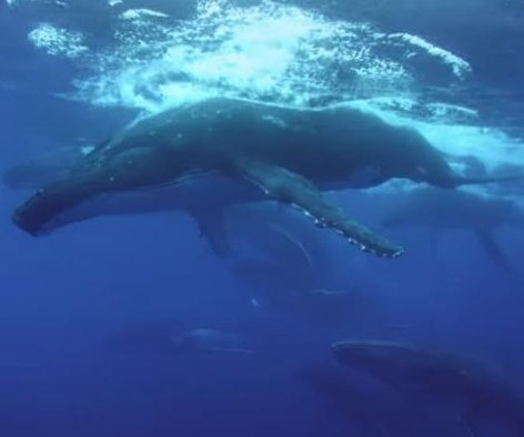 'The Loneliest Whale' trailer searches for the elusive 52 Hertz whale