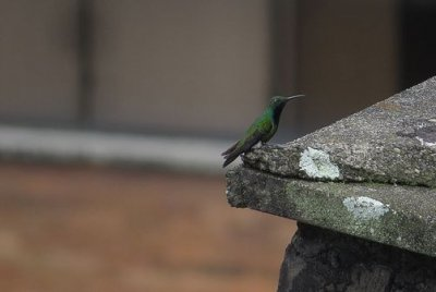 Bird species increased in urban areas during human lockdowns for the pandemic