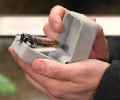 Bronx Zoo tells visitors to name roaches for their Valentines