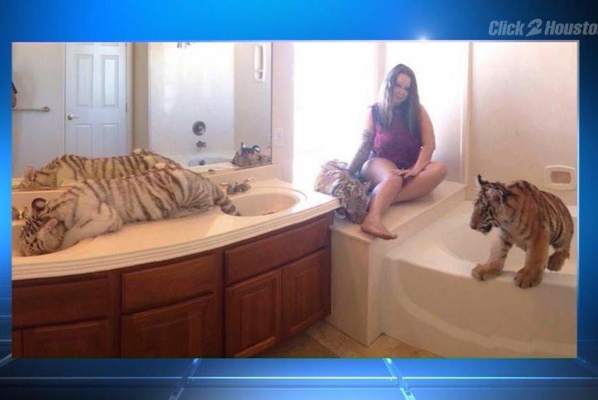 Watch  Houston area woman kept tigers in her home   UPI com UPI com