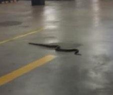 Slithering snake shocks shoppers in mall parking garage
