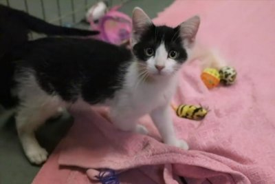Shelter finds new homes for kittens with 'wobby cat syndrome'