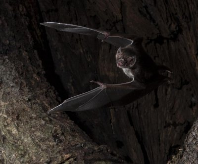 Vampire bats socially distance when they fall ill