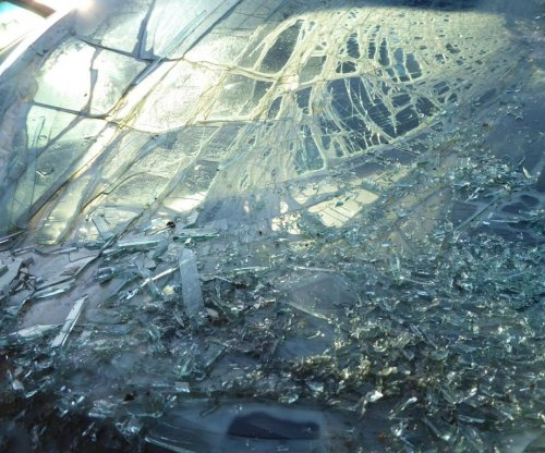 Turtle crashes through windshield on Florida highway, survives