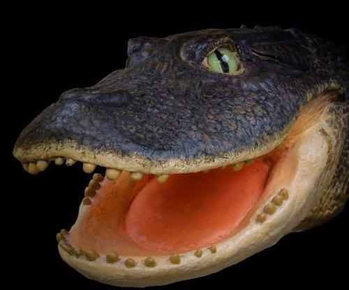 Pre-Amazonian Peru was ruled by crocodiles