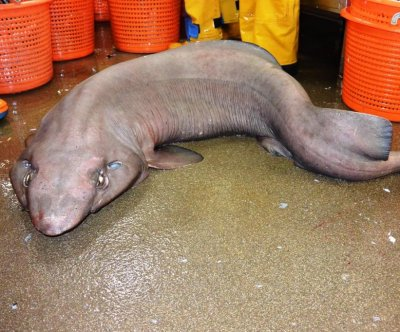 Scottish scientists surprised by rare 'sofa shark'
