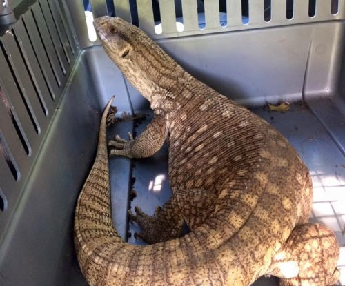 Large monitor lizard found wandering loose in Wisconsin