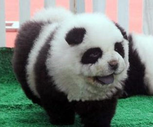 Police: Circus dyed dogs to pass off as pandas