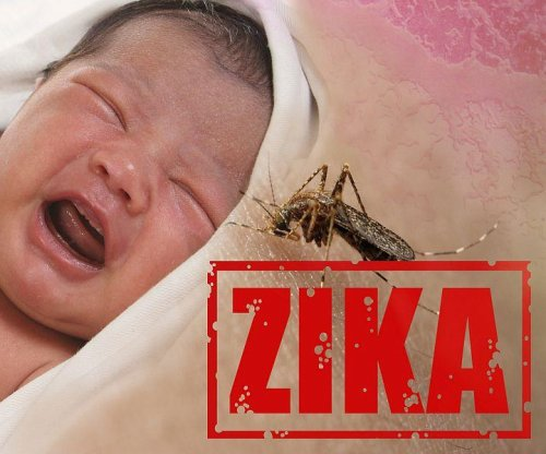New clues to Zika's threat to fetus, and how to stop it