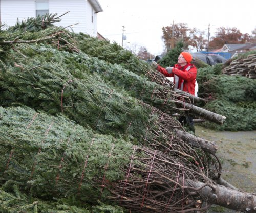 Recession takes toll after decade -- Christmas tree supply