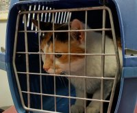 Passenger flight turns around in Sudan when stowaway cat attacks pilot