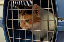 Passenger flight turns around in Sudan when stowaway cat attacks pilot