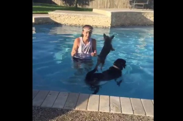 Watch Small Dog Jumps For A Ride On Swimming Canine S