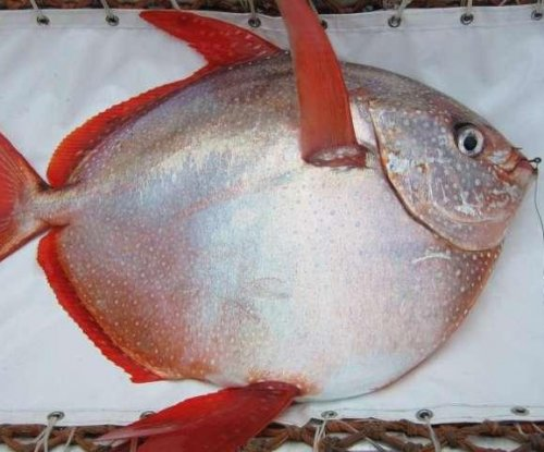 Scientists discover first warm-blooded fish