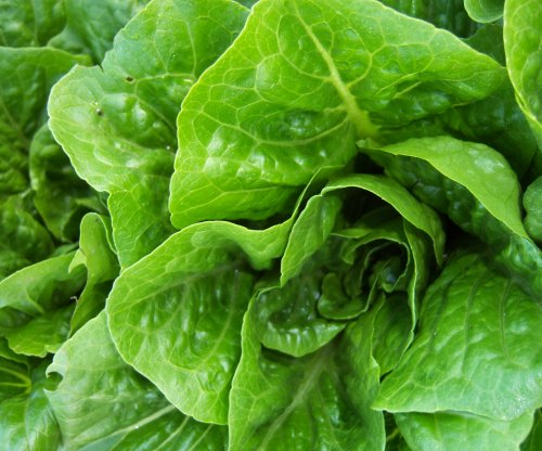 Cases rise in E. coli outbreak tied to romaine lettuce