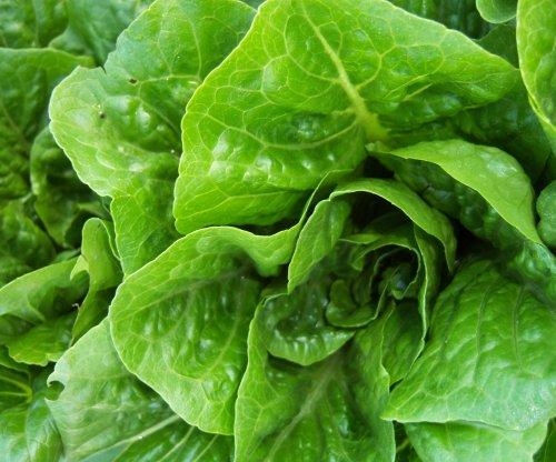 Cases rise in E. coli outbreak tied to romaine lettuce