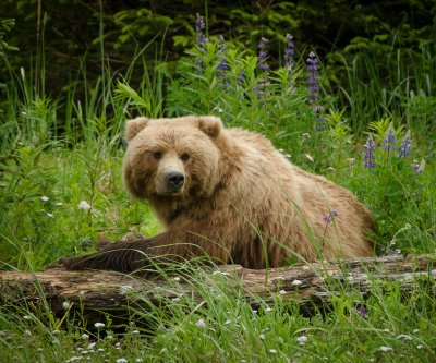 Montana man fends off grizzly bear by inducing gag reflex