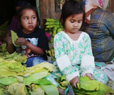 Report: Child workers up against tough conditions, health risks in Indonesian tobacco fields
