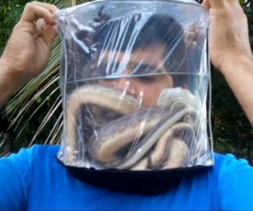 Brazilian activist puts head in bin of snakes, tarantulas