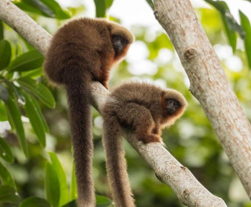 Bolivia's Madidi National Park is most biodiverse in the world
