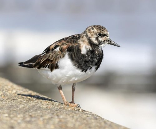 Warming Arctic could disrupt migration patterns of millions of birds