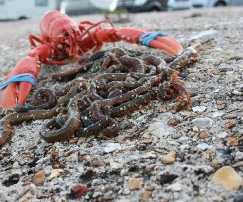 Study: Bait worms a surprisingly valuable marine resource