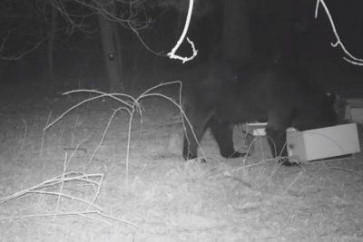 'Beehive bandit' bear raids honey from Minnesota family's hive