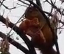 Michigan man spots squirrel eating pizza on tree branch
