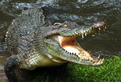 Florida man says he shot crocodile for killing neighbors