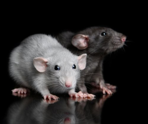 NMN compound reduces signs of aging in mice