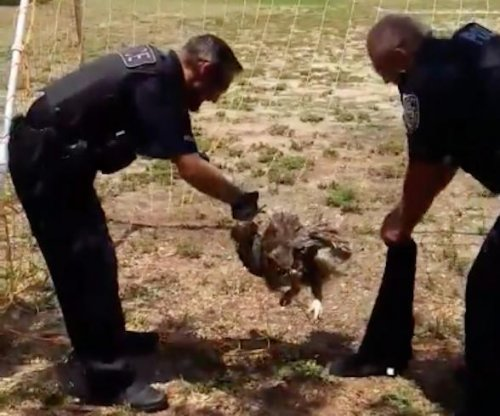 Florida police cut owl loose from soccer net