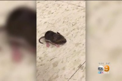 Mice found in boot at Kmart given new home