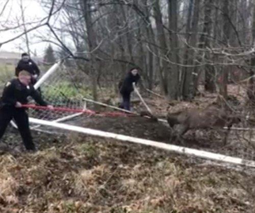 Police, neighbors free deer from soccer net twice