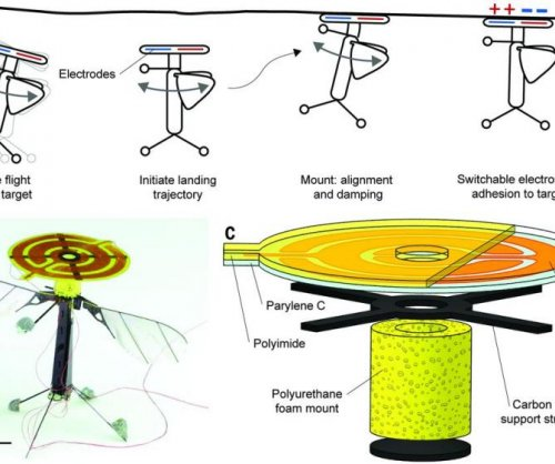 MIT researchers unveil perching bee robot