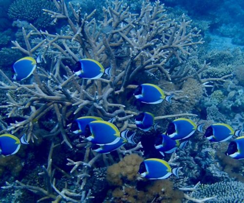Scientists find refuge for corals threatened by global warming
