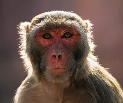 Monkeys cause chaos inside government building in New Delhi