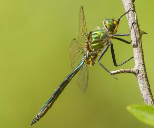 Dragonflies can predict their prey's next move