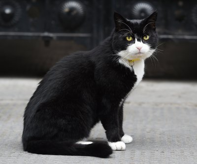 British Foreign Office's 'Chief Mouser' announces retirement