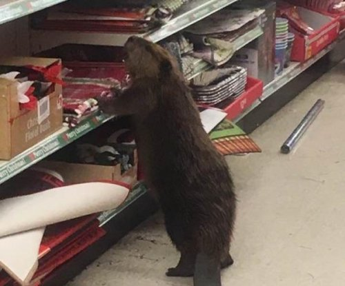 Beaver found browsing aisles of Maryland dollar store