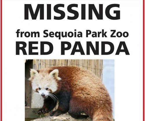 Zoo's escaped red panda recovered after two days on the loose