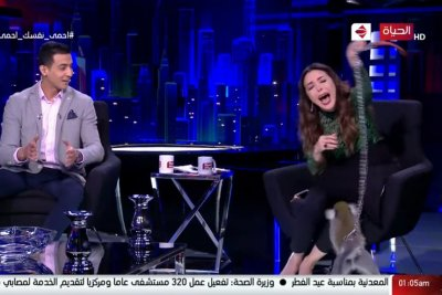Monkey chases host out of studio during TV interview
