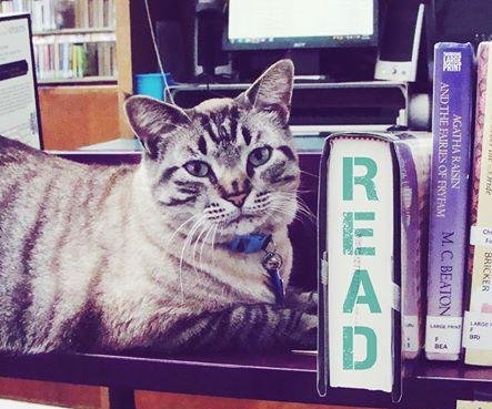 Texas mayor blames city council's anti-cat bias for library eviction