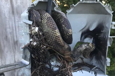Large snake at power transformer causes Kentucky outage