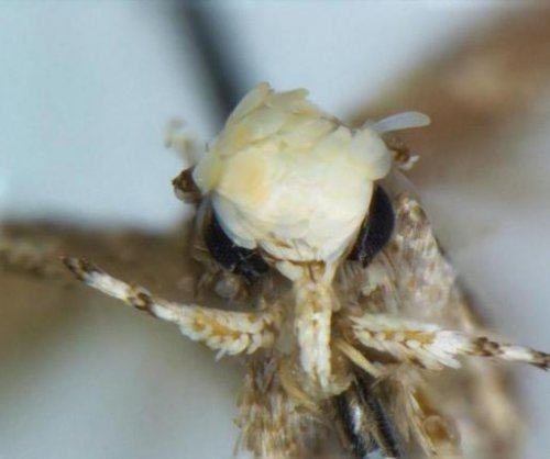 New moth species named for Donald Trump's hair