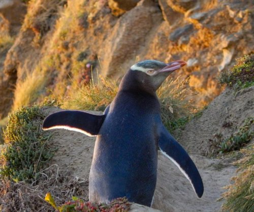 New Zealand's penguins facing extinction, scientists warn